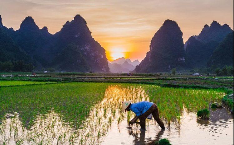 Vùng đất ngập nước là động lực của sự sống